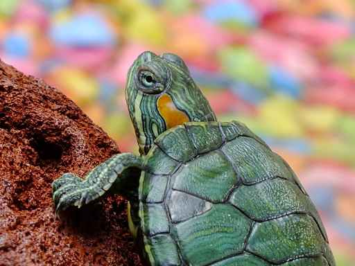 water animals green reptile